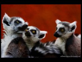 Lemurs Familly by sekhmet-neseret