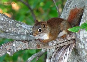 Where Are The Nuts ? by CanonSX20