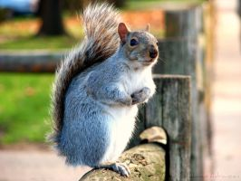 Squirrely Senses by Littography