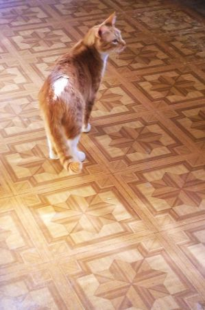 Twinkie Twinkletoes on the kitchen tiles by MystMoonstruck