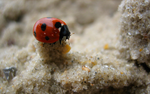 Lady Bug on the Tower of Sand by Appl3ju1ce