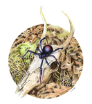 Spider - study by blossomdec4y