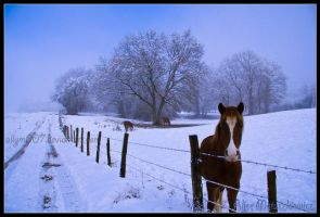 Colt in the snow by allym007