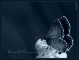 Gossamer Winged by WaitingForTheWorms
