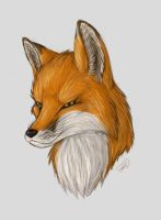 fox head - fur color test by ForcesWerwolf