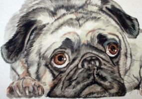 Devyn's Pug by RamonaQ