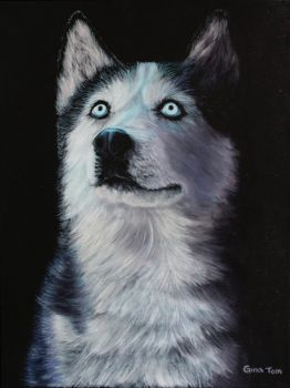 Isis the Siberian Husky by Nevermore1849