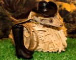 I Want To Be A Cowboy - 1140 by creative1978
