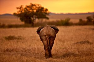 My Africa 16 by catman-suha