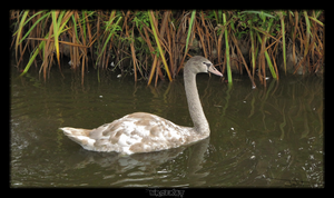 The Ugly Duckling by MrDeKat