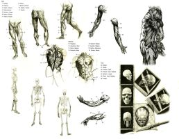 Human parts by A-Nessessary-Studio
