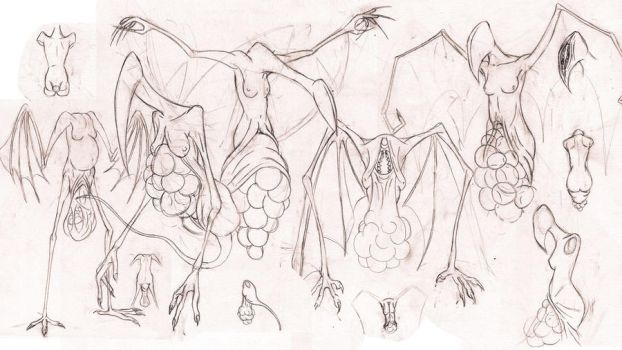 Harpy Sketches by SamTremain91