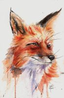 Fox Study in Watercolor by justinprokowich