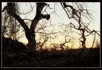 Old wicked trees by serp8ine