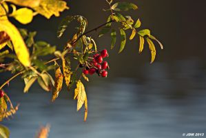 Fall Berries 2 by JDM4CHRIST