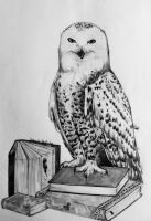 Library Owl by GabrielleC-Drawings