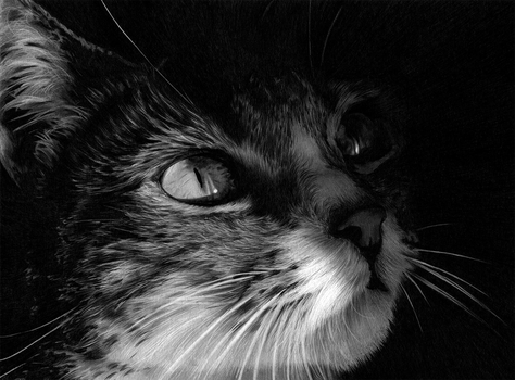 Cat Pencil Drawing by Sophie-Lawson