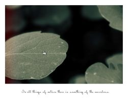 In all things of nature ... by BlackFlowerBlossoms