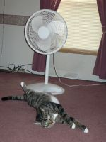 My cat-Tig-cooling off by deuce6000