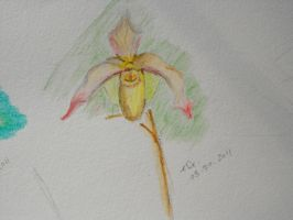 Watercolour Orchid 2 by Ginger-PolitiCat