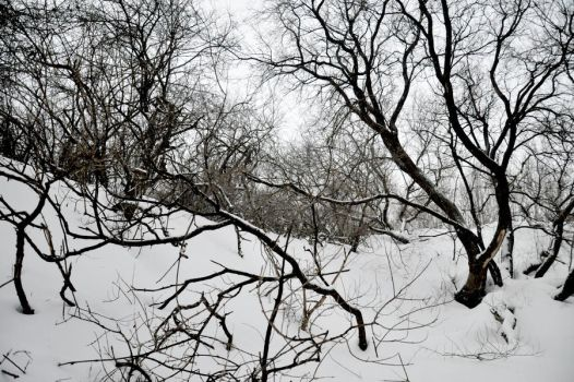 Snow and Branches by hyneige