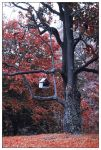 red leaves 04 by negromante