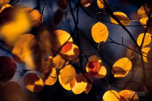 Autumn Tones III by Nitrok