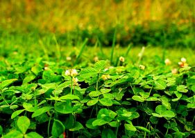 My bed of green by skyros09