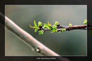 Spring Green by sicmentale