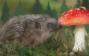 Hedgehog and mushroom by sacso