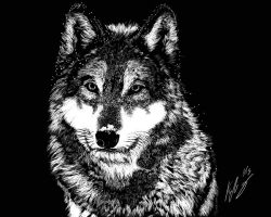 Wolf Scratchboard 01 11 2013 by Frabulator