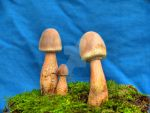 More HDR Mushrooms 8 by Dracoart-Stock