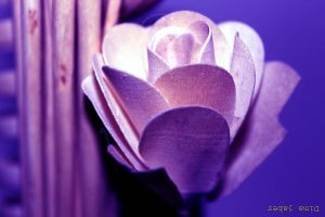 wooden flower by dimajaber