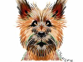 Cairn Terrier iPad Doodle by CalSlater