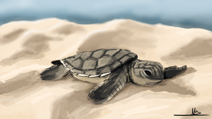 344 - Baby Turtle by Shasel