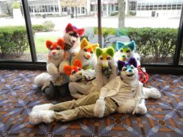 Rainbow Huskies! for sale 3 by DrakonicKnight
