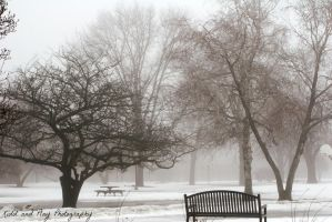 Foggy Bench by BengalTiger4