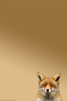 Happy Fox for your Iphone by thrumyeye