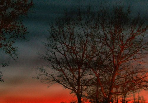 Dark Tree on the Sunset by bOB-tHE-hIPPIE
