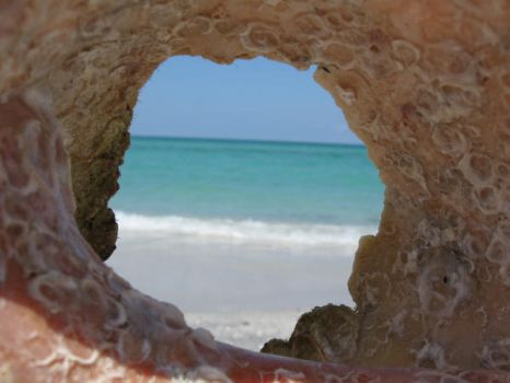 conch view by dreadedhippie