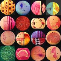 Biology is Beautiful. by joelent
