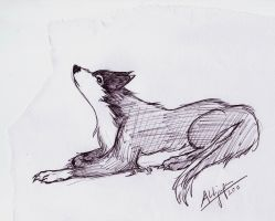 abandoned wolfie by devALLjapan