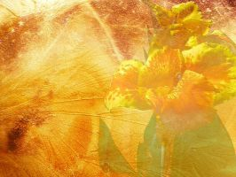 Sunny Textures by mysticmorning