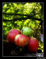 Apples 06 by dugonline
