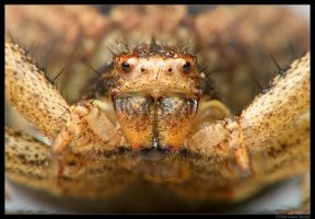 Crabby Face by mantispid