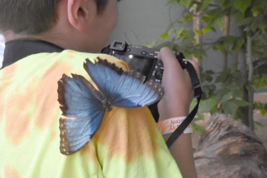 Welcome Friend, Butterfly On the Shoulder by Miss-Tbones