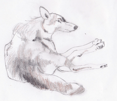 Wolf (Grisaille) by ZkullDefence