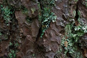 Tree Bark 2 by joannastar-stock
