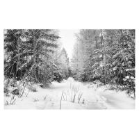 Winter Path mono by wchild