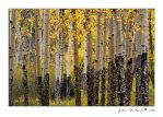 The Aspen Stand by kkart